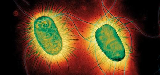 micro-organismes